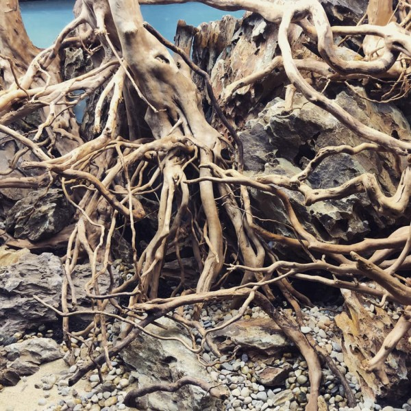 Branchwood Bruchstücke